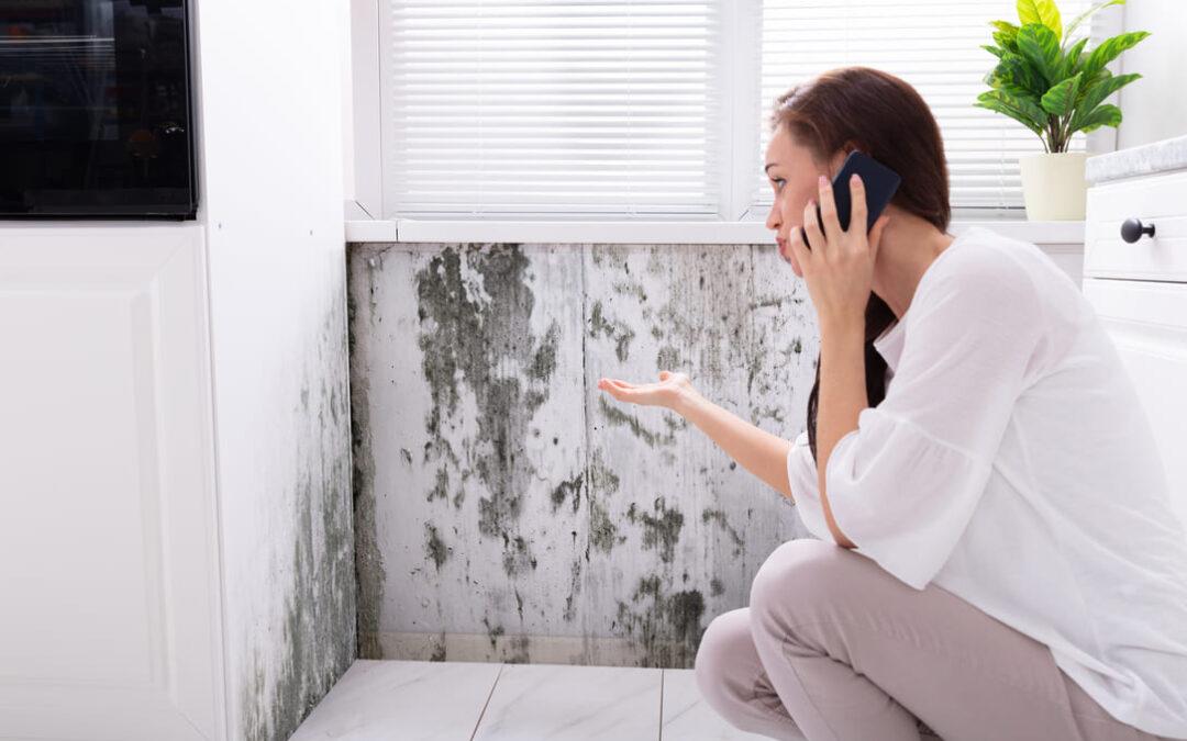 How to Sell Your House with Mold to a Wholesaler