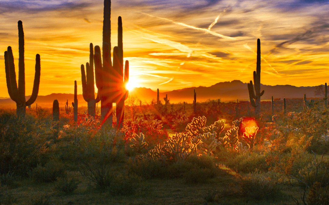 What Is The Difference Between Phoenix And Tucson?
